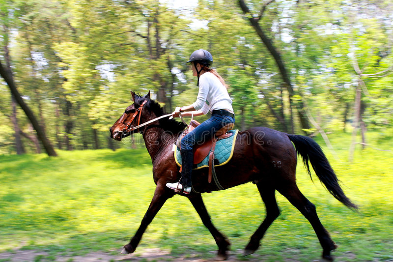 Download Cavaleiro do cavalo foto de stock. Imagem de potro, gamble - 4984746