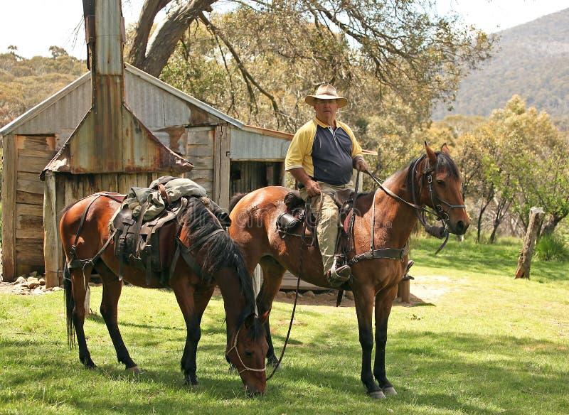 Cavaleiro do cavalo fêmea imagem de stock royalty free