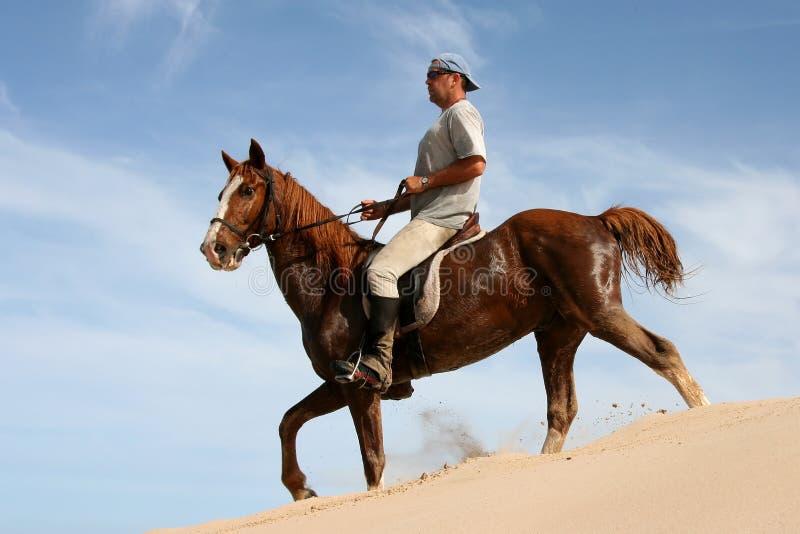 Cavaleiro do cavalo na duna de areia imagens de stock royalty free