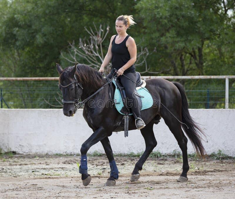 Cavaleiro e cavalo da mulher imagens de stock
