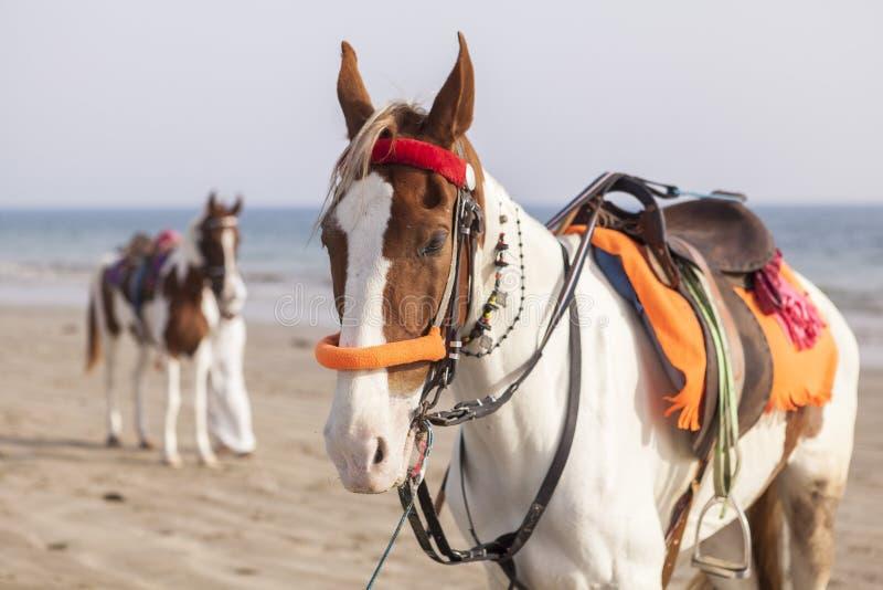 Cavaleiro na praia de Karachi, Paquistão fotos de stock royalty free