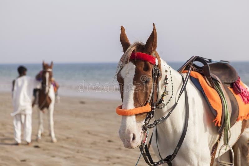 Cavaleiro na praia de Karachi, Paquistão imagem de stock royalty free