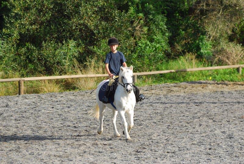 Cavaleiro pequeno do cavalo imagem de stock royalty free