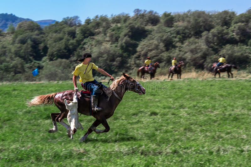 Cavaleiro que galopa em um cavalo com uma carcaça da cabra Equitação nacional do jogo do Cazaque - kokpar fotografia de stock royalty free
