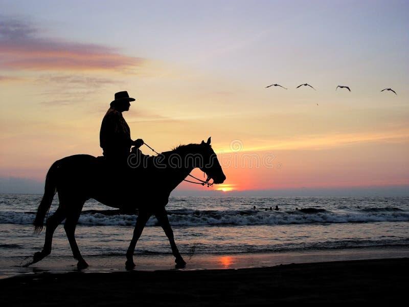 Cavaleiro solitário
