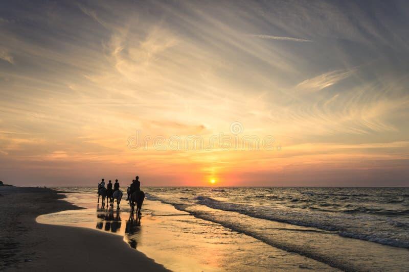 Cavaleiros a cavalo que montam ao longo do litoral no por do sol imagens de stock