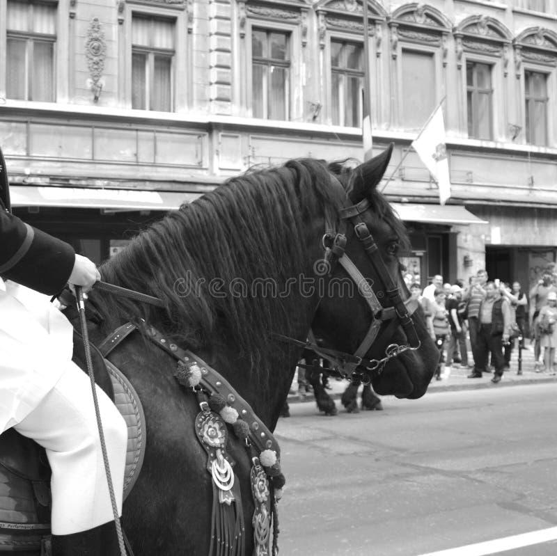Cavaleiros com os cavalos durante Juni Parade, em Brasov, a Transilvânia foto de stock