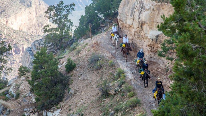 Cavaleiros da mula em Angel Trail brilhante fotografia de stock royalty free