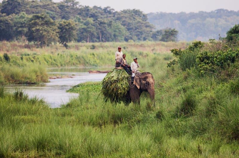 Cavaleiros do elefante no parque nacional de Chitwan fotos de stock royalty free