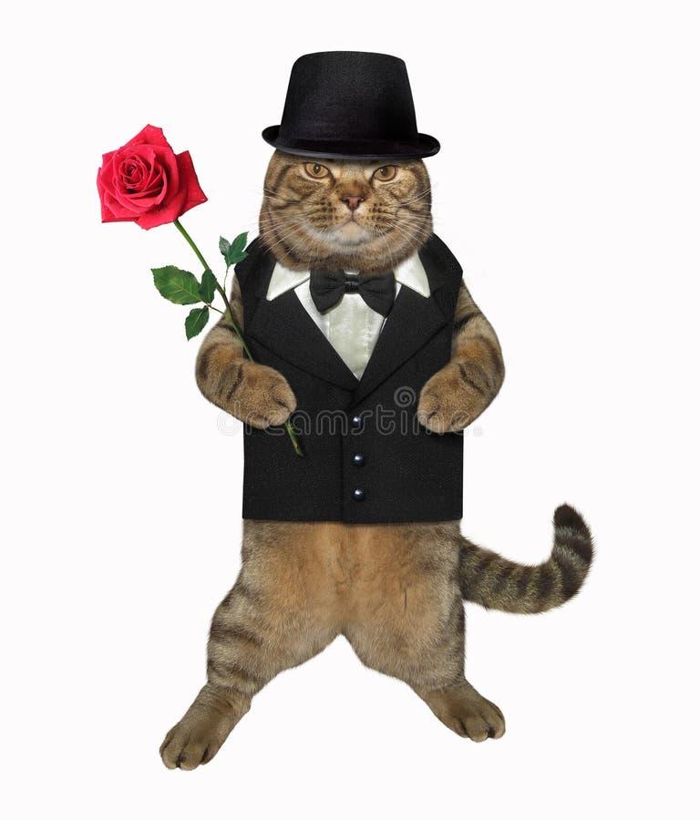 Cavalheiro do gato com uma rosa vermelha 2 imagem de stock