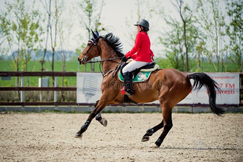 Cavalier équestre de cheval Décrivez montrer un concurrent exécutant en concurrence de sauter d'exposition photos libres de droits