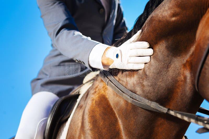 Cavalier bienfaisant choyant son beau cheval foncé photo libre de droits