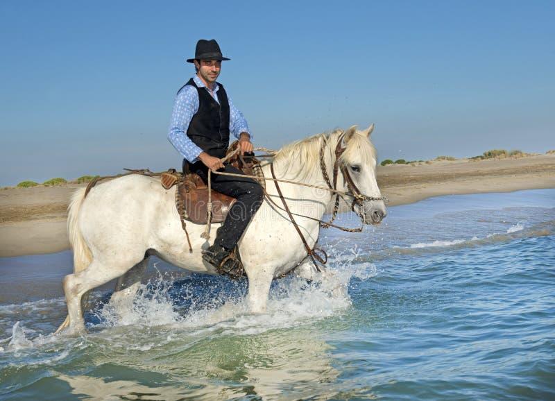 Cavalier de cheval en mer photo stock