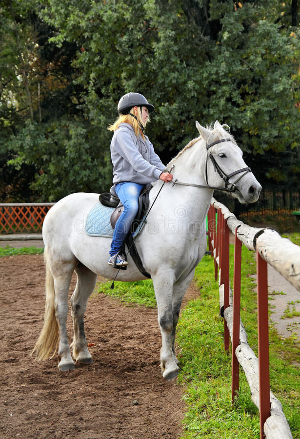 Cavalier de fille sur un cheval photographie stock libre de droits