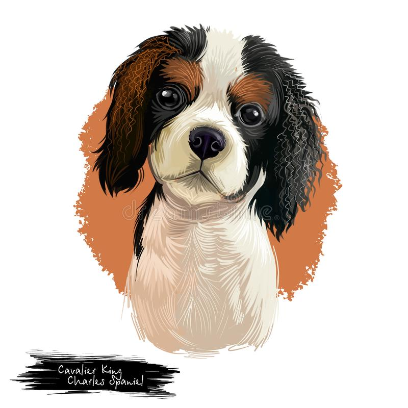 Cavalier King Charles Spaniel dog breed isolated on white background digital art illustration. Cute pet hand drawn. Portrait. Graphic clipart design realistic royalty free illustration