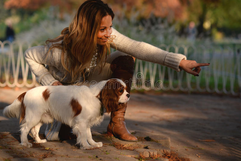 Cavalier King Charles Spaniel dog and a girl are together in the park enjoying beautiful autumn day. Beautiful dog Cavalier King Charles Spaniel, white with red stock photo