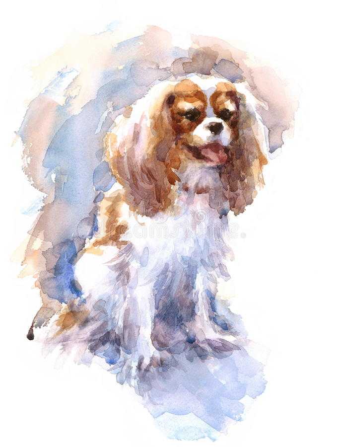 Cavalier King Charles Spaniel Watercolor Dog Breed Animal Illustration Hand Painted. Hand painted side view Watercolor Portrait of Cavalier King Charles Spaniel stock illustration