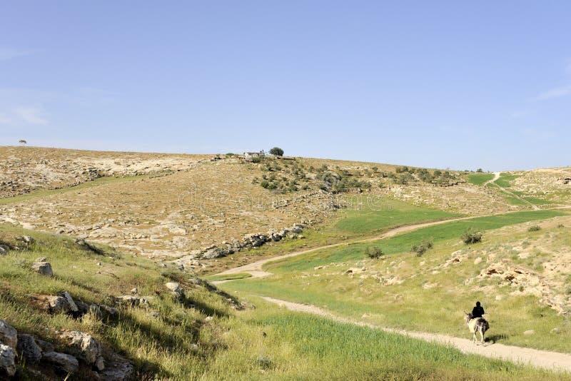 Cavalier seul dans le désert de Judea, Israël. images stock