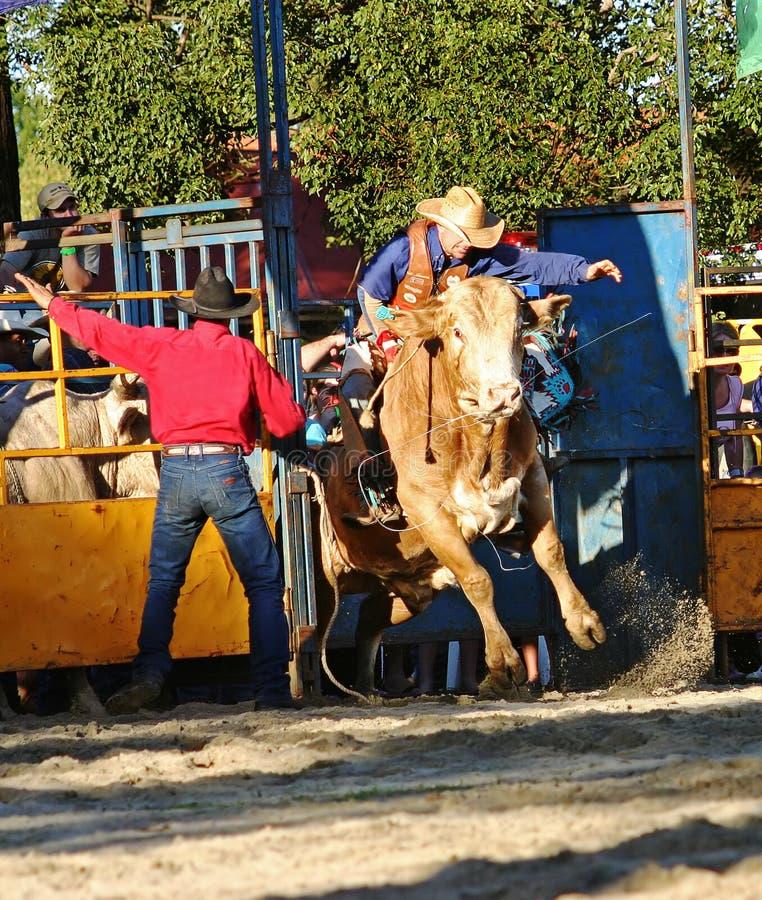 Download Cavaliere 2 del Bull fotografia stock. Immagine di ranch - 220366