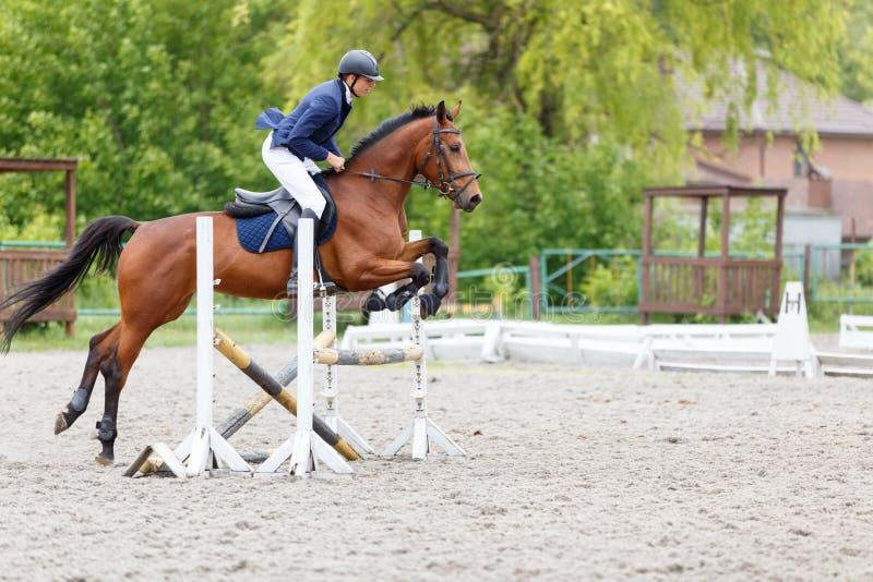 Cavaliere che esegue salto sul cavallo di baia sopra la transenna fotografia stock libera da diritti