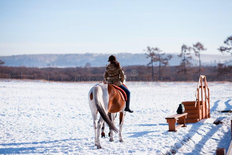 Cavaliere del cavallo di inverno fotografie stock