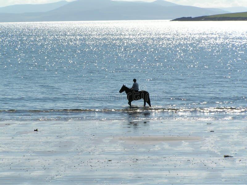 Cavaliere del cavallo sulla spiaggia fotografia stock libera da diritti