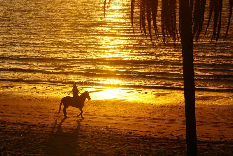 Cavaliere del cavallo, tramonto della spiaggia dell'oceano del Pacifico Meridionale fotografie stock libere da diritti