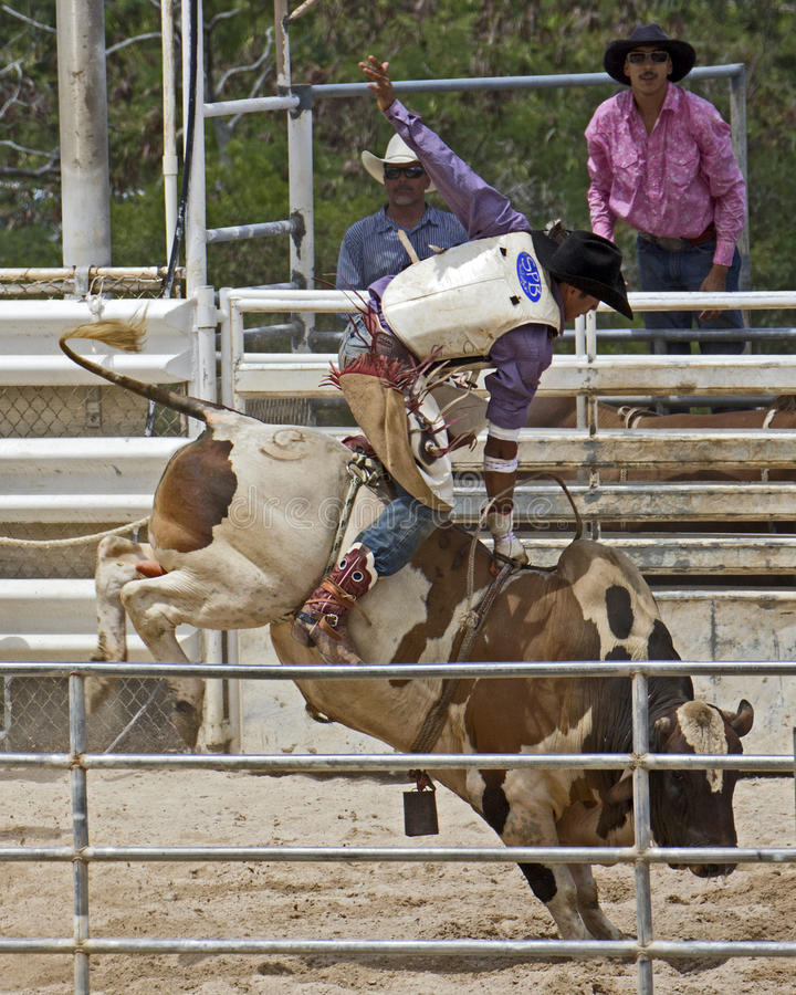 Cavaliere del toro fotografie stock