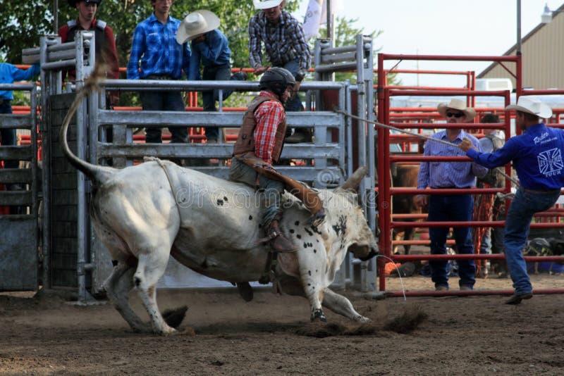 Cavaliere del toro fotografia stock