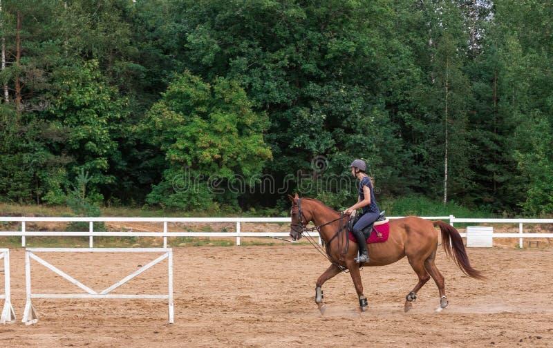 Cavaliere della ragazza su un dressage nel parco su un cavallo snello immagini stock libere da diritti