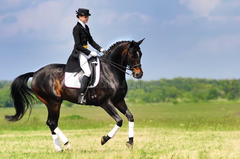 Cavaliere di dressage sul cavallo di baia che galoppa nel campo immagine stock