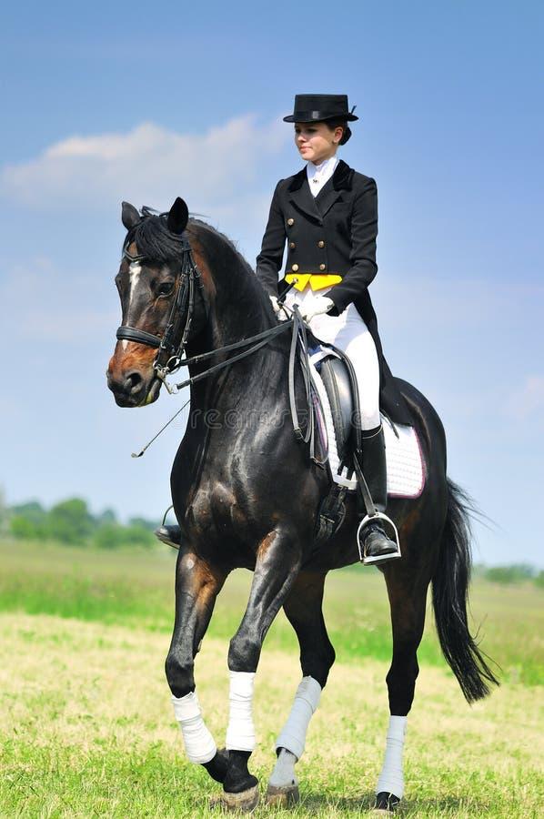 Cavaliere di dressage sul cavallo di baia che galoppa nel campo immagine stock libera da diritti