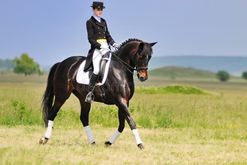 Cavaliere di dressage sul cavallo di baia nel campo fotografia stock