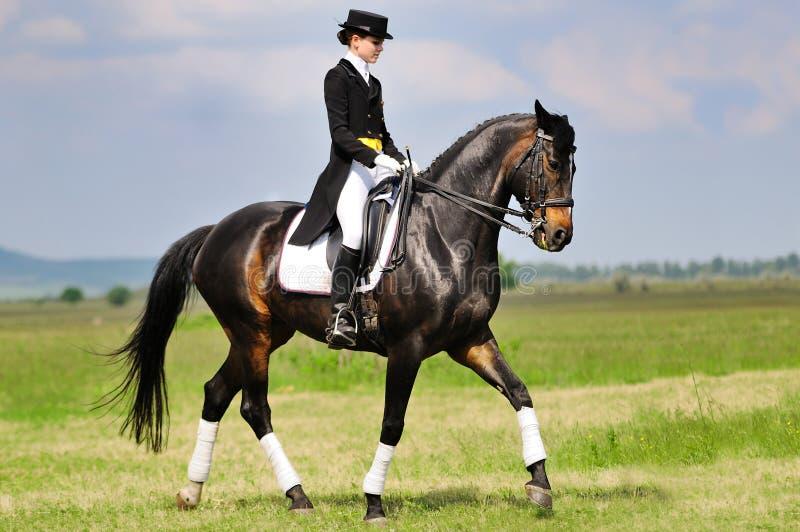Cavaliere di dressage sul cavallo di baia nel campo fotografia stock libera da diritti