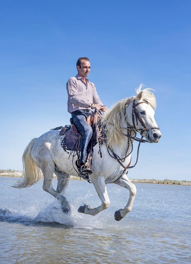 Cavaliere e cavallo sulla spiaggia fotografie stock