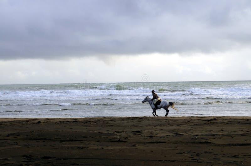 Cavaliere solo del cavallo su una spiaggia immagini stock