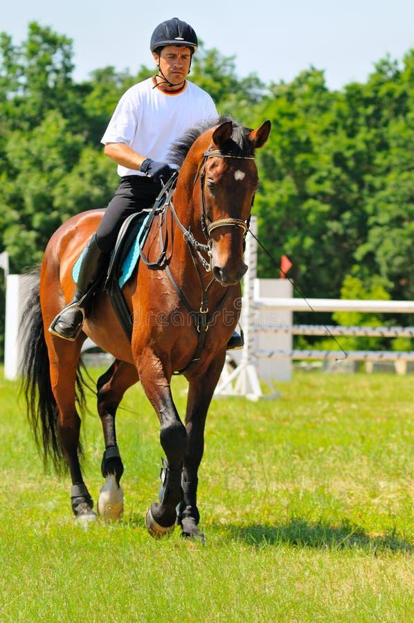 Cavaliere sul cavallo allegro della baia immagine stock