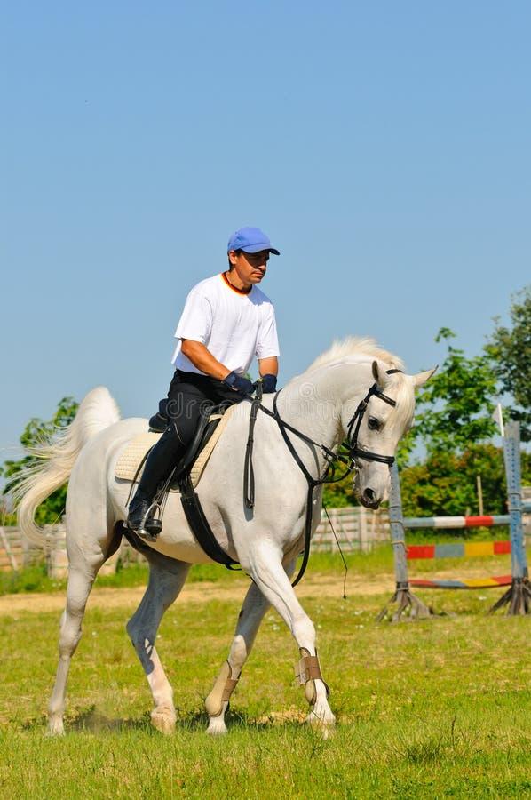 Cavaliere sul cavallo arabo bianco immagini stock libere da diritti