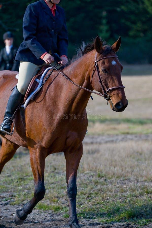 Cavaliere sul cavallo in campagna fotografia stock