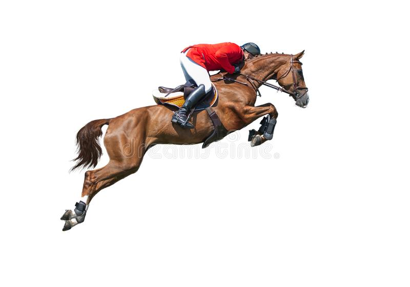 Cavaliere sul cavallo di baia nella manifestazione di salto, isolata su fondo bianco fotografie stock libere da diritti