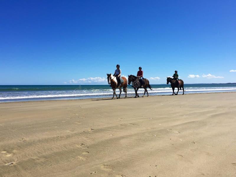 Cavalieri a cavallo su una spiaggia da 90 miglia, Ahipara, Nuova Zelanda fotografia stock