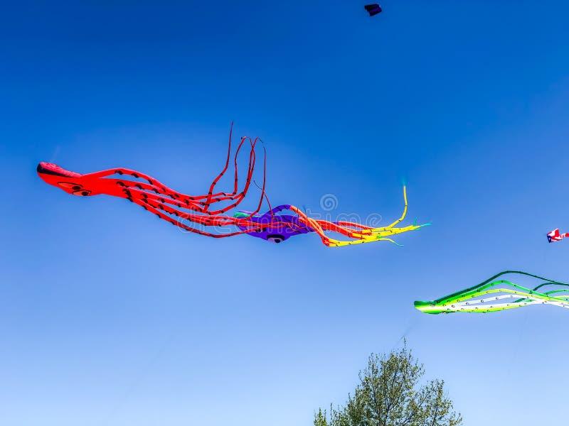 Cavalieri di Columbus Kites nell'aria immagine stock libera da diritti