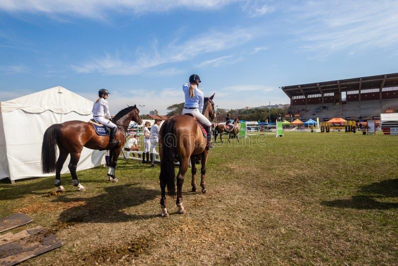 Cavalieri equestri dei cavalli dell'arena dopo fotografia stock libera da diritti