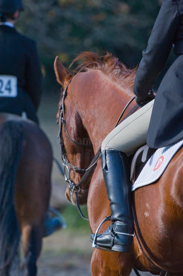 cavalieri equestri di evento fotografia stock