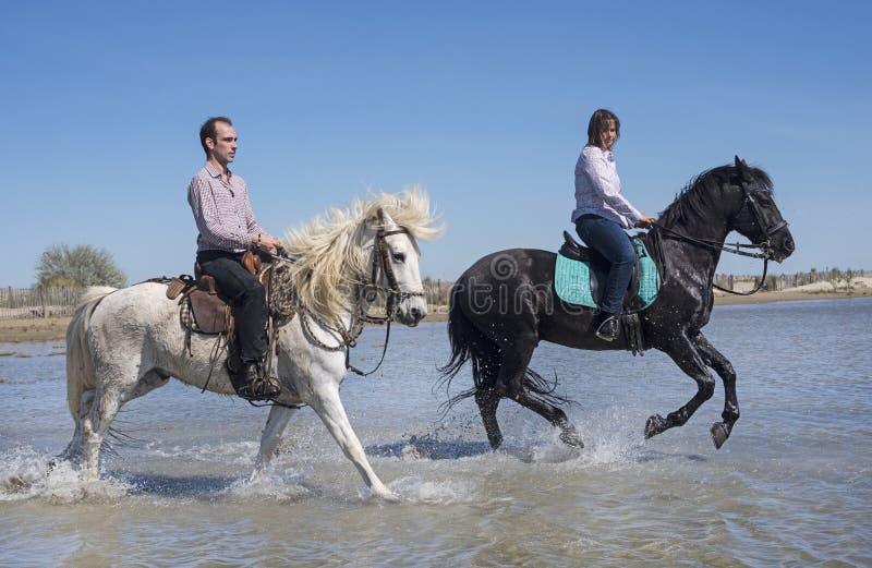 Cavalieri sulla spiaggia fotografia stock libera da diritti