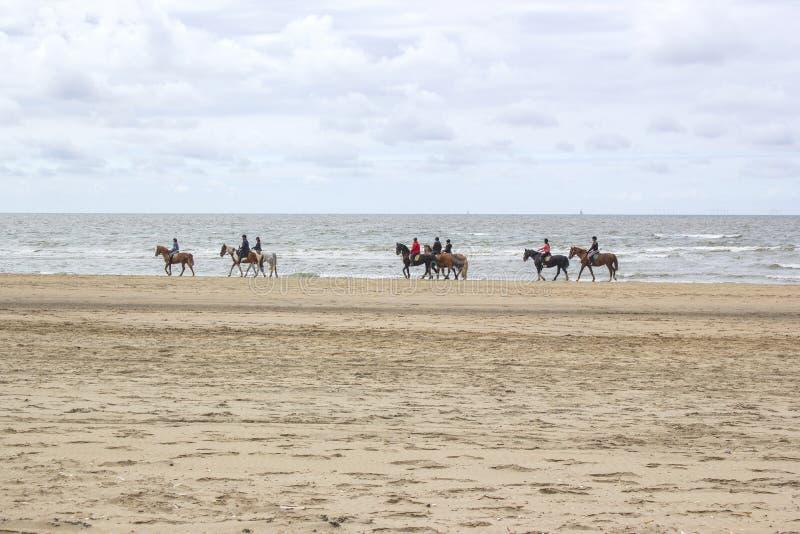 Cavaliers sur des chevaux sur la plage photos stock