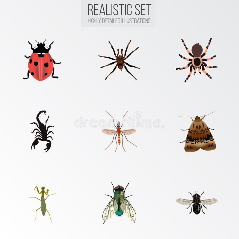 Cavalletta realistica, zanzara, aracnide ed altri elementi di vettore L'insieme dei simboli realistici dell'insetto inoltre inclu royalty illustrazione gratis