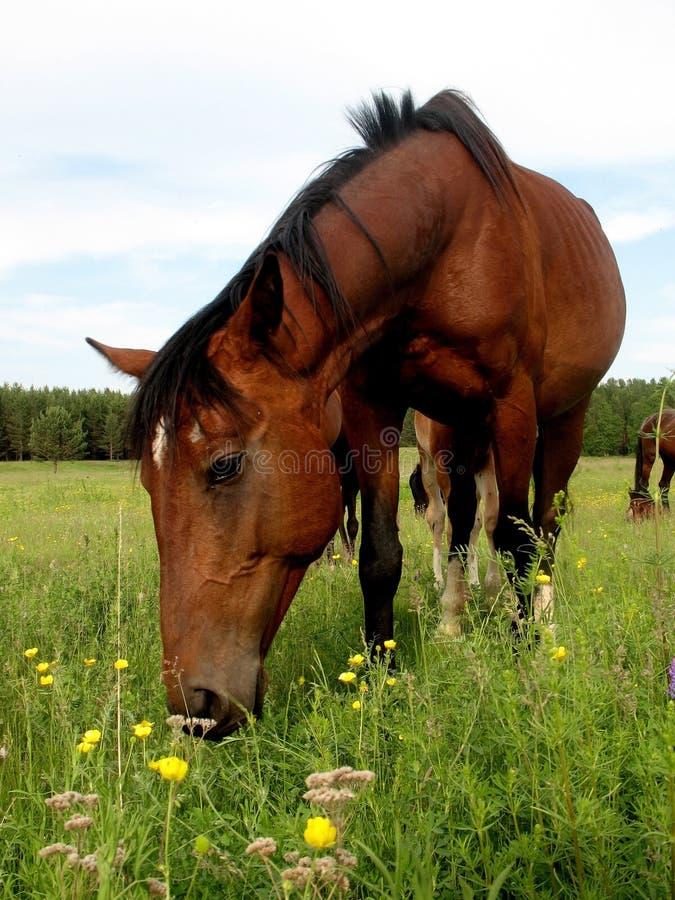 Download Cavalli fotografia stock. Immagine di cavallo, yellow - 7319812