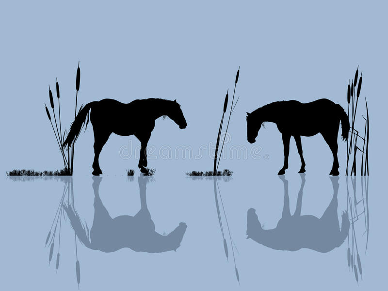Cavalli all'acqua royalty illustrazione gratis