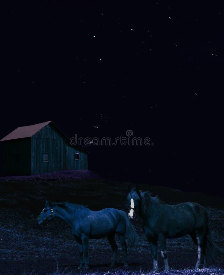 Cavalli alla notte fotografia stock libera da diritti